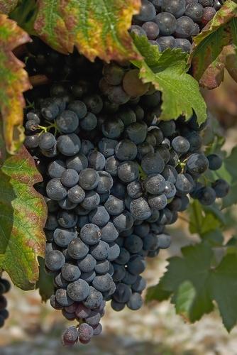 Ukraine wine
