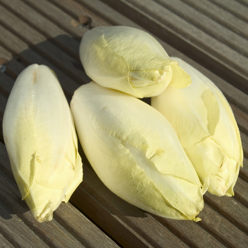 Nutritional Benefits of Endive