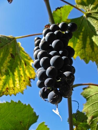 romania wine
