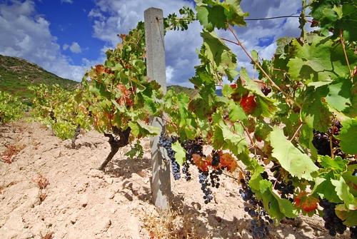 Bulgaria wine regions
