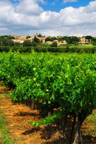 wine region france
