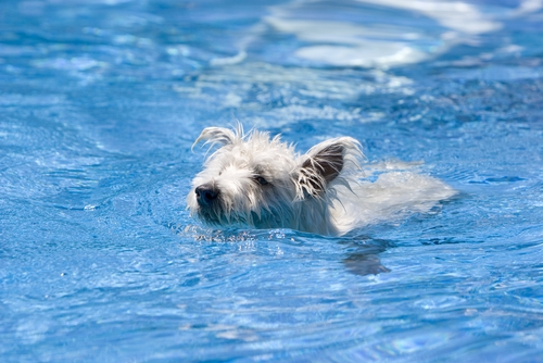 Teaching Your Dog to Swim