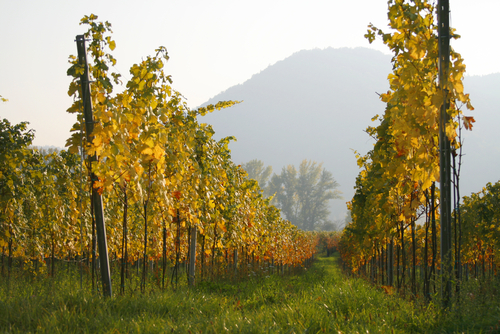 austria winery