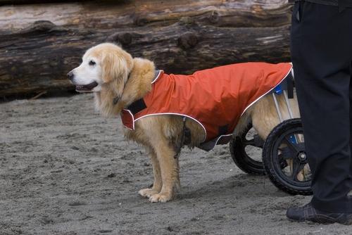 Dealing with Devastating Pet Injuries