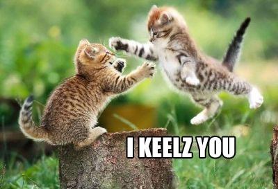 yahoo icahn catfight