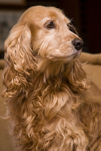 Allergies In Dogs