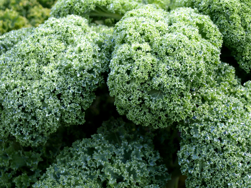 Nutritional Benefits of Kale