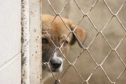 Overcoming Fear in Dogs