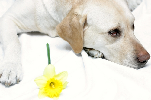 Treating Dog Allergies