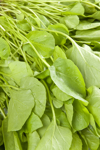 Eating Watercress Can Kill Cancer Cells