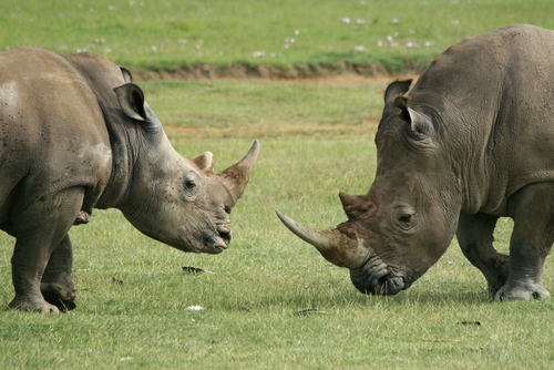 Best Time to Enjoy Kenyan Safari